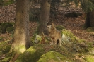 Wolves_8