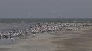 Tanji Bird Reserve_5