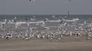Tanji Bird Reserve_1