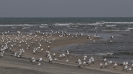Tanji Bird Reserve_3