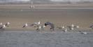 Tanji Bird Reserve_4