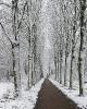 Winter wonderland 2017_2
